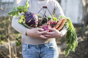 Partial view of woman holding wire basket with root vegetablの写真素材 [FYI04336864]