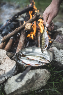 Man's hand putting rudd into a pan for frying at camp fireの写真素材 [FYI04336868]