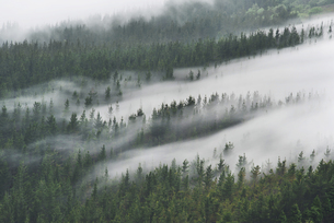 Spain, Basque Country, mist in the forest of Oizの写真素材 [FYI04336905]
