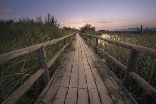 Fine art photography of a wooden path at sunset in a marsh iの写真素材 [FYI04336914]