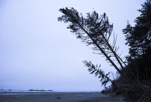 Canada, British Columbia, Vancouver Island, tilting trees atの写真素材 [FYI04337395]