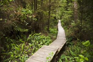 Canada, British Columbia, Vancouver Island, wooden boardwalkの写真素材 [FYI04337398]