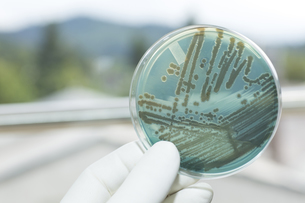 Germany, Freiburg, Human hand holding petri dish with bacterの写真素材 [FYI04337475]