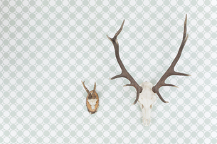 Germany, Freiburg, Deer antlers hanging on wall, close upの写真素材 [FYI04337477]