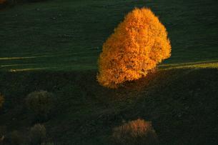Spain, Asturias, autumnal tree at Natural Park of Fuentes deの写真素材 [FYI04337691]