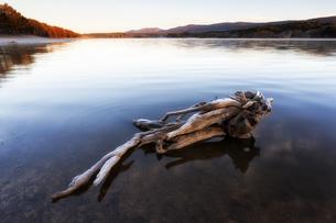 Spain, Soria, root in water of reservoir of La Cuerd la delの写真素材 [FYI04337701]