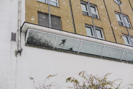 Germany, Saxony, Leipzig, Plagwitz, facade with mirror imageの写真素材 [FYI04337795]