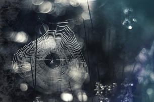 Germany, Bavaria, View of morning dew on spider webの写真素材 [FYI04337806]