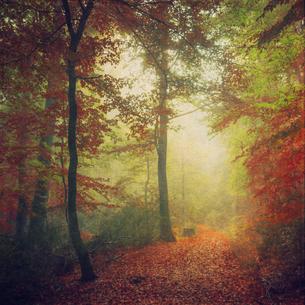 Germany, North Rhine-Westphalia, Wuppertal, Forest track inの写真素材 [FYI04337815]