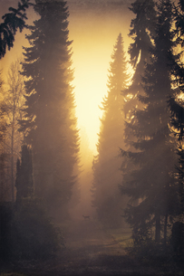 Germany, roe deer and trees in backlightの写真素材 [FYI04337816]