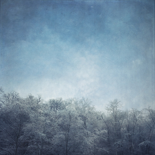 Germany, frost-covered treetopsの写真素材 [FYI04337817]
