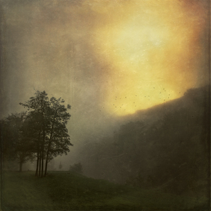 Landscape at sunrise in the fog, textured effectの写真素材 [FYI04337828]