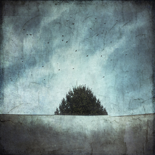 Treetop and roof with flying birds, textured effectの写真素材 [FYI04337831]