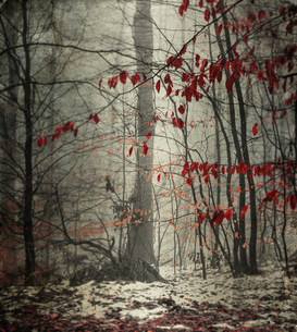 Winter forest with last leavesの写真素材 [FYI04337843]