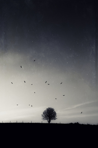 Tree and flying birds at nightの写真素材 [FYI04337844]