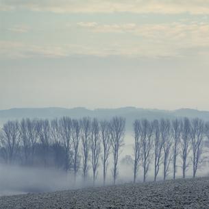 Gernany, North Rhine-Westphalia, Morning fog over fieldsの写真素材 [FYI04337868]