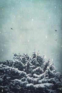 Germany, Wuppertal, fir tree in winterの写真素材 [FYI04337881]