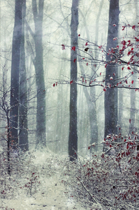 Germany, Wuppertal, winter forest, textured photographyの写真素材 [FYI04337883]
