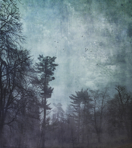 Germany, Wuppertal, forest at hazy dawn, textured photographの写真素材 [FYI04337884]