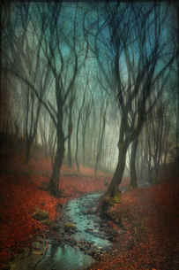 Germany, Wuppertal, stream in autumn forest, manipulated phoの写真素材 [FYI04337885]