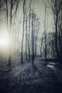 Man on forest path at sunriseの写真素材 [FYI04337889]
