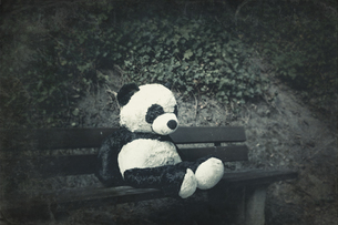 Panda soft toy on a benchの写真素材 [FYI04337893]