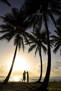 Dominican Rebublic, silhouette of palms and man with surfboaの写真素材 [FYI04338241]
