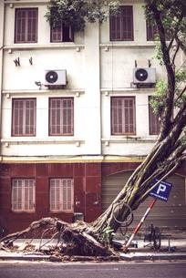 Vietnam, Hanoi, fallen tree on street after typhoonの写真素材 [FYI04338301]