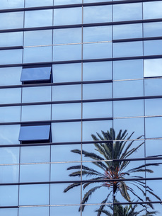 Spain, Barcelona, palm tree reflecting on glass front of modの写真素材 [FYI04338360]
