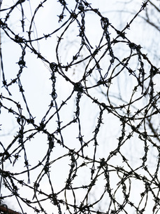 Barbed wire, close upの写真素材 [FYI04338362]