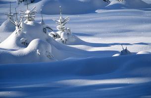 Snowy landscapeの写真素材 [FYI04338369]