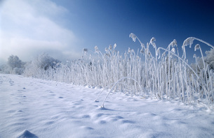 Germany, Bavaria, Kochelmoos, frozen field on snow-covered lの写真素材 [FYI04338374]