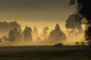 Germany, Landscape in mistの写真素材 [FYI04338391]
