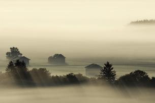 Germany, Bavaria, Landscape in morning mistの写真素材 [FYI04338392]