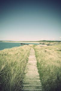 Great Britain, Wales, Ynys Llanddwyn, trail at coastの写真素材 [FYI04338414]