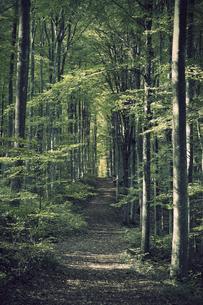 Germany, Baden-Wuerttemberg, Beech Forestの写真素材 [FYI04338417]