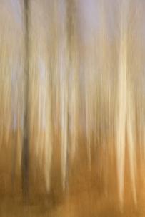 Germany, Baden-Wuerttemberg, Beech forest, wipe effectの写真素材 [FYI04338430]