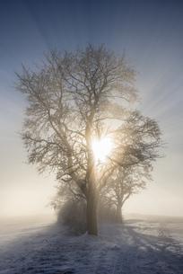 Germany, Baden-Wuerttemberg, Constance district, sun shiningの写真素材 [FYI04338467]