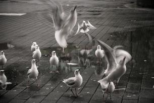 Australia, New South Wales, Sydney, flock of seagullsの写真素材 [FYI04338617]