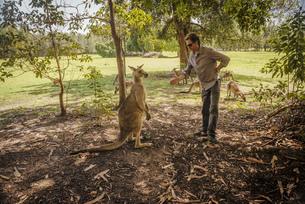Australia, New South Wales, man preparing to make handshakeの写真素材 [FYI04338631]