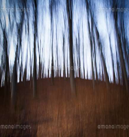 Germany, Bavaria, Trees in forestの写真素材 [FYI04338653]