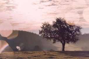 Austria, Muhlviertel, Tree in autumnal landscapeの写真素材 [FYI04338725]