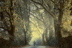 Italy, Tuscany, Val d'Orcia, person on tree-lined road in moの写真素材 [FYI04338730]