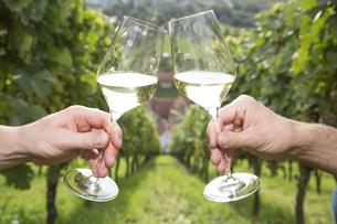 Germany, Bavaria, Volkach, clinking glasses in vineyardの写真素材 [FYI04339096]