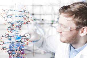 Germany, Young scientist with DNA modelの写真素材 [FYI04339373]