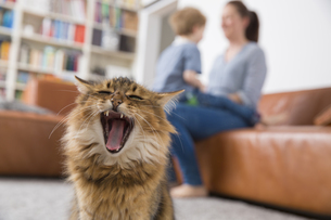 Yawning cat sitting in living room, mother and son playing iの写真素材 [FYI04339778]