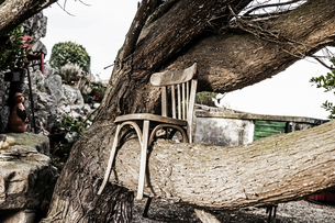 Wooden chair on tree trunkの写真素材 [FYI04339865]