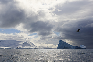 South Atlantic Ocean, Antarctica, South Shetland Islands, Viの写真素材 [FYI04340149]