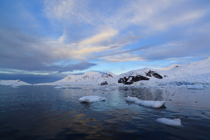 South Atlantic Ocean, Antarctica, Antarctic Peninsula, Gerlaの写真素材 [FYI04340161]