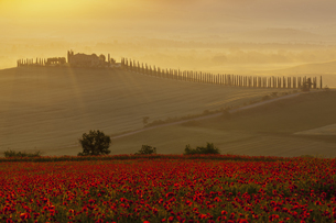 Italy, Tuscany, Crete, View of poppy field in front of farmの写真素材 [FYI04340177]